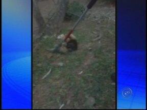 Tamanduá é resgatado em chácara na Zona Rural de Bauru, SP - Um tamanduá apareceu em uma chácara na Zona Rural de Bauru (SP) na manhã deste domingo (19). O animal estava em cima de uma árvore e foi resgatado pela Polícia Ambiental.