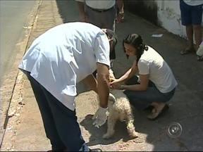 Itapetininga realiza campanha de vacinação contra raiva em animais - Começa a campanha de vacinação antirrábica para cães e gatos em Itapetininga (SP). De acordo com o serviço de controle de zoonoses, da Secretaria Municipal de Saúde, a ação será realizada até 3 de outubro.