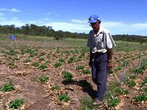 Propostas do programa de crédito rural são analisadas - O programa de crédito rural para agricultores e trabalhadores rurais, serve construírem a tão sonhada casa própria.