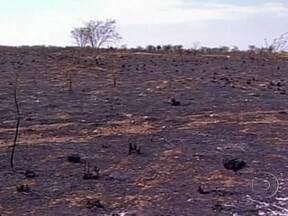 Tempo seco favorece queimadas no oeste da Bahia - Na região, a estiagem já dura cinco meses e boa parte dos pastos foram destruídos pelo fogo. Muitos dos pequenos pecuaristas não sabem o que fazer para alimentar os animais.