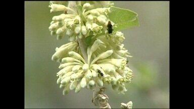 Inter TV Rural mostra que é possível aliar a apicultura à conservaçao do meio ambiente - Com isso, fica provado que o trabalho das abelhas vai além da produção do mel.