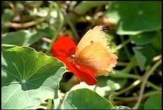 Conheça um jardim de borboletas no Brejal, em Petrópolis, RJ - Além de mostrar a biodiversidade, as borboletas têm um papel fundamental na cadeia alimentar de diversas espécies.