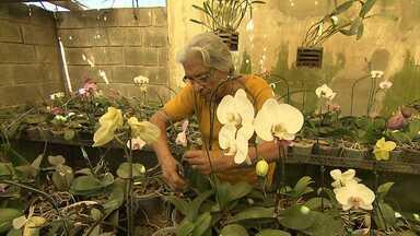 Feira reúne centenas de espécies de orquídeas em Belo Horizonte - Algumas atingem altos preços.