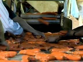 Produtores aliam técnicas modernas às tradicionais para garantir boa safra de cenoura - O cultivo da cenoura é a principal fonte de renda de Carandaí, em Minas Gerais. Aliando técnicas modernas às tradicionais, eles conseguem ter uma produção constante o tempo todo.