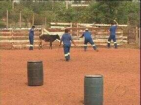 Conheça o treinamento para prender animais nas estradas - Funcionários de concessionárias passaram por treinamento.