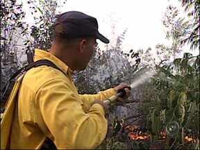 GM combate incêndio em área florestal em Jundiaí, SP - Os Guardas Municipais da Divisão Florestal de Jundiaí, trabalham desde o início da tarde desta quarta-feira (10) no combate a um incêndio em área de proteção ambiental da cidade.