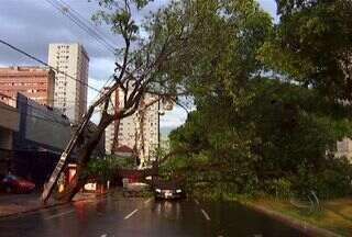 Chuva derruba árvore em cima de carro em avenida de Campo Grande - Por causa da chuva, uma árvore caiu numa das rodovias mais movimentadas da capital.