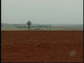 Previsão de produção de soja deixa produtores otimistas no Centro-Oeste Paulista - Agricultores da região de Ourinhos, SP, deverão plantar 40 mil hectares de soja. Em várias propriedades, a terra já está pronta e os produtores otimistas com a safra de verão.