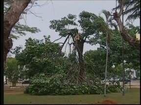 Após altas temperaturas, chuva causa estragos no noroeste paulista - Depois de calor e a região noroeste paulista registrar as temperaturas mais altas do ano, nesta quinta-feira (1º) o tempo mudou. Choveu forte em algumas cidades e o vento causou estragos.