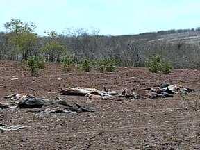 Seca causa prejuízos no sertão de Pernambuco - No município de Serrita, no sertão de Pernambuco, a seca ainda causa muito prejuízo. Mais de 20 cabeças de gado morrem, por dia, de fome e sede.