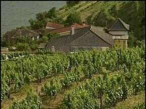 Conheça o Vale do Douro, berço do vinho do porto em Portugal - Em outra reportagem, o Campo e Lavoura já visitou a região do Minho.