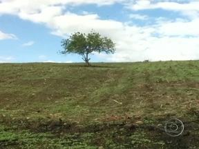 Agricultores aproveitam a chuva para plantar no Nordeste - As pancadas de chuva foram isoladas, mesmo assim o plantio já começou. A estiagem durou seis meses. Os agricultores aproveitam as primeiras chuvas para começar a plantar.