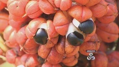 Frutos amazônicos podem ajudar a saúde de pessoas idosas - Frutos da Região amazônica são uma opção saborosa que pode ajudar a proteger a saúde de pessoas idosas.