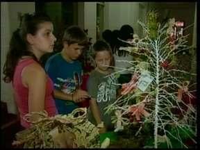 Concurso de árvores natalinas com butiazeiro - Uma escola de Giruá inovou com o símbolo natalino