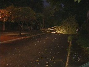 Árvore interdita rua na região do Porto Meira - Os moradores já tinham pedido a retirada da árvore