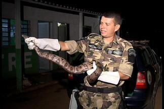 Jiboia é capturada no jardim da casa do Embaixador dos EUa no Brasil - Animal foi capturado e será solto no Parque Nacional de Brasília após passar por exames.