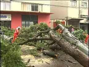 Chuva forte causa estragos em Cascavel - Uma árvore da altura de um prédio de três andares caiu em cima de dois carros.