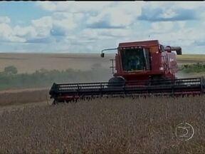 Colheita da soja está em ritmo acelerado no Mato Grosso - A ótima produtividade das lavouras animou os agricultores. Segundo estimativas, a produção estadual deve passar das 24 milhões de toneladas, 13% a mais que na temporada passada.