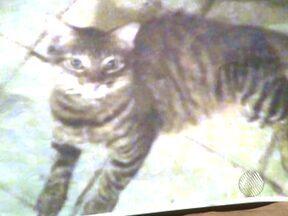 Mulher faz apelo por informações sobre gata de estimação que desapareceu - O animal sumiu há um mês, no bairro da Boca do Rio.