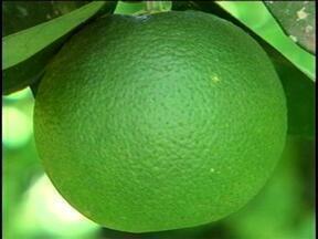 Agricultores do Norte do RS apostam no sistema de agroflorestas - Cultivo é integrado com a natureza.