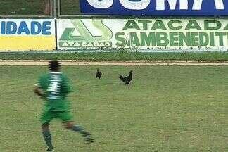 Galinhas invadem jogo do Campeonato Cearense - Aves não pareciam incomodar jogadores do São Benedito e do Icasa