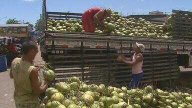 Seca reduz em 20% a produção de coco no Nordeste - O percentual é em relação ao ano passado. Os preços do coco dispararam nas praias e nos centros de distribuição.