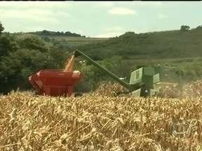 Começa a colheita da safra do milho no Paraná - Os agricultores do sudoeste do estado já iniciaram a colheita do grão. Em 2013, a produção deve superar a de 2012. De acordo com a Secretaria de Agricultura do Paraná, a previsão é de que 6,9 milhões de toneladas do grão sejam colhidos.