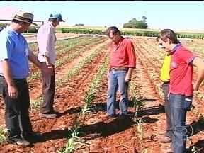 Agricultores do Paraná se reúnem para aprender técnicas de aumento na produtividade - O encontro acontece por três dias na Cooperativa de Maringá. Os produtores das regiões norte e nordeste do estado aprendem técnicas simples e modernas para aumentar a produtividade das lavouras de soja e milho.
