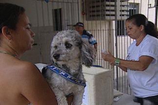 Campanha de vacinação contra raiva animal acaba nesta quarta na Paraíba - Meta é imunizar certa de 400 mil cães e 190 mil gatos.