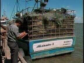 Catorze toneladas de peixes são aprendidas em São José do Norte, RS - Embarcação onde os peixes foram apreendidos apresentava irregularidades.