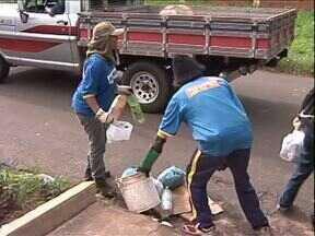 Ações de combate à dengue continuam nesse sábado em Paranavaí - Arrastão no bairro Morumbi, em Paranavaí, recolhe muitos materiais nos terrenos e quintais. Enquanto isso, o pronto-atendimento da cidade continua lotado