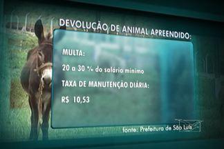Blitz Urbana apreende animais abandonados nas ruas de São Luís - Quase 40 bichos foram apreendidos somente em janeiro. A maioria recolhida não é recuperada pelos donos, que precisam pagar multa para ter o animal de volta.