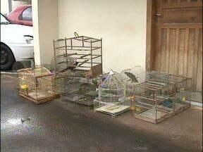 Pássaros silvestres são apreendidos em uma casa em Francisco Beltrão - Um rapaz de 27 anos foi preso.