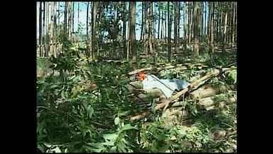Homem morre quando trabalhava no corte de árvores na zona rural de Patos de Minas - Segundo bombeiros, homem usava luvas e óculos, mas estava sem capacete. Empresa não foi encontrada para falar sobre o acidente.