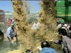 Festa de abertura da colheita do arroz atrai milhares de pessoas para Restinga Seca (RS) - Cerca de cinco mil pessoas participaram das festividades. A expectativa dos produtores do estado é que a safra seja uma das melhores do últimos anos, chegando a 7,7 milhões de toneladas do cereal.