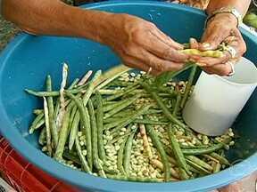 Agricultores colhem a safra do feijão no sul do Ceará - A chuva ajudou e já tem agricultor colhendo feijão no sul do Ceará. Com a entrada da safra, o preço caiu.
