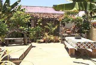 Paisagista em Sergipe dá dicas de decoração com plantas - Pode ser em um ambiente interno ou externo, as plantas são uma boa pedida para um local mais arejado e terapeutico. Paisagista dá as dicas de decoração.