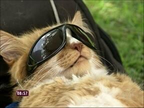 Chiquinho é rei! Conheça gato folgado que faz sucesso na praia - Geovanna Tominaga confere as peripécias desse gato de São Conrado
