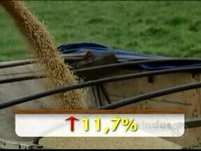 Agricultores esperam boa safra de soja em Araxá, MG - Mais de três milhões de toneladas devem ser colhidas este ano no estado.