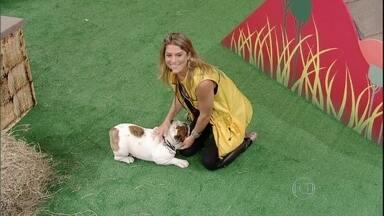 Priscila Fantin e Chico dão show no Cachorrada VIP - A atriz mostrou tudo o que aprendeu nos treinamentos do quadro do Domingão