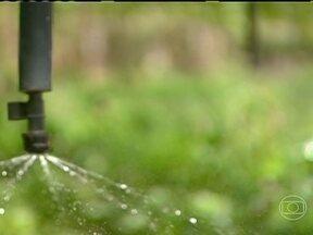 Saiba como é o sistema de cobrança da água em áreas irrigadas - Vamos saber como está sendo implantado o sistema de cobrança por ela. Em muitos lugares, a agricultura só é possível com a irrigação, como acontece, por exemplo, no Vale do Rio São Francisco, na fronteira entre Pernambuco e a Bahia.