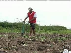 Chuva muda a paisagem do sul do Ceará - Muitos agricultores aproveitaram o novo cenário com a volta da chuva para ir ao campo e fazer o replantio. Animados com o novo quadro, eles estão esperançosos com uma boa colheita.