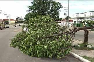 Árvore cai em pleno canteiro central da Avenida São Marçal, no João Paulo - É o segundo registro de queda de árvore esta semana. Na terça (19), uma árvore caiu em cima de um caminhão na Av. Beira-Mar, no Centro.