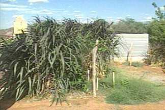 Projeto reutiliza água para produzir alimento para animais no Cariri da Paraíba - Água da lavanderia de Cabaceiras agora serve de irrigação.