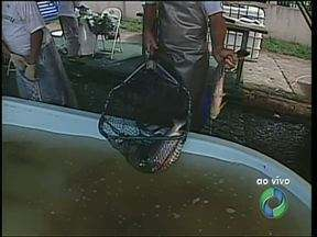 Começa hoje Feira do Peixe Vivo em Londrina - Consumidor pode escolher o peixe fresco, com bastante variação de preço.