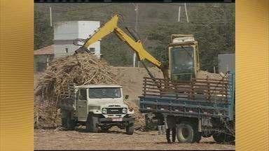 Agricultores começam a receber cana-de-açúcar para alimentar o gado - Medida do governo do estado pretende diminuir impactos da seca que atinge os rebanhos do interior.