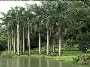 Exposição reúne 700 espécies de plantas no Inhotim - Em Inhotim, obras de arte e plantas raras estão juntas em um enorme jardim botânico. São 700 espécies, de vários cantos do mundo. E é exatamente nessa época do ano que as palmeiras ficam ainda mais bonitas.