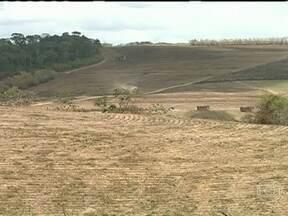 Estiagem prolongada diminui safra de cana-de-açúcar em Alagoas - A safra 2012/2013 terminou com um saldo negativo no estado. Apenas 44 milhões de sacas de açúcar foram produzidas, três milhões a menos que na safra 2011/2012. A falta de chuva foi o principal motivo para essa diminuição.
