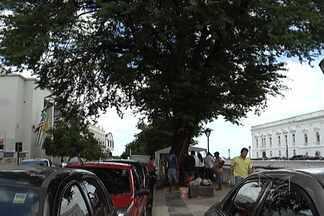 Falta de cuidados com as árvores da cidade representa uma série de riscos - Sem podas, muitas delas ameaçam cair com as chuvas, outras estão morrendo sem tratamento adequado. Na Praça Dom Pedro II, em São Luís, apesar de ser tombada pelo patrimônio histórico, árvore está ameaçada e infestada de cupins.