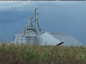 Agricultores reclamam da falta de armazéns para estocar o milho safrinha em MT - Agricultores de Mato Grosso estão preocupados com a falta de armazéns para estocar a produção de milho safrinha. Boa parte da soja, retirada das lavouras no começo do ano, permanece nos galpões.